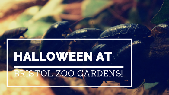 Halloween at Bristol Zoo Gardens with cockroaches in the background.