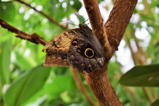 A brown and yellow butterfly on a branch.