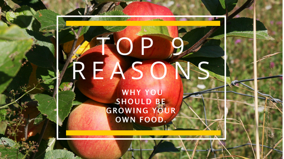 Top 9 Reasons Why You Should be Growing Your Own Food.