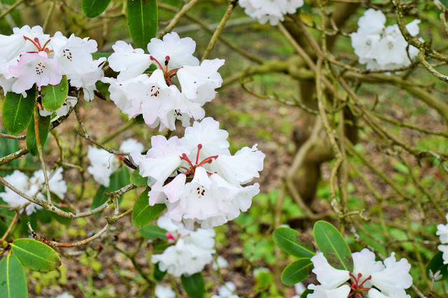 blossom on a tree at RHS