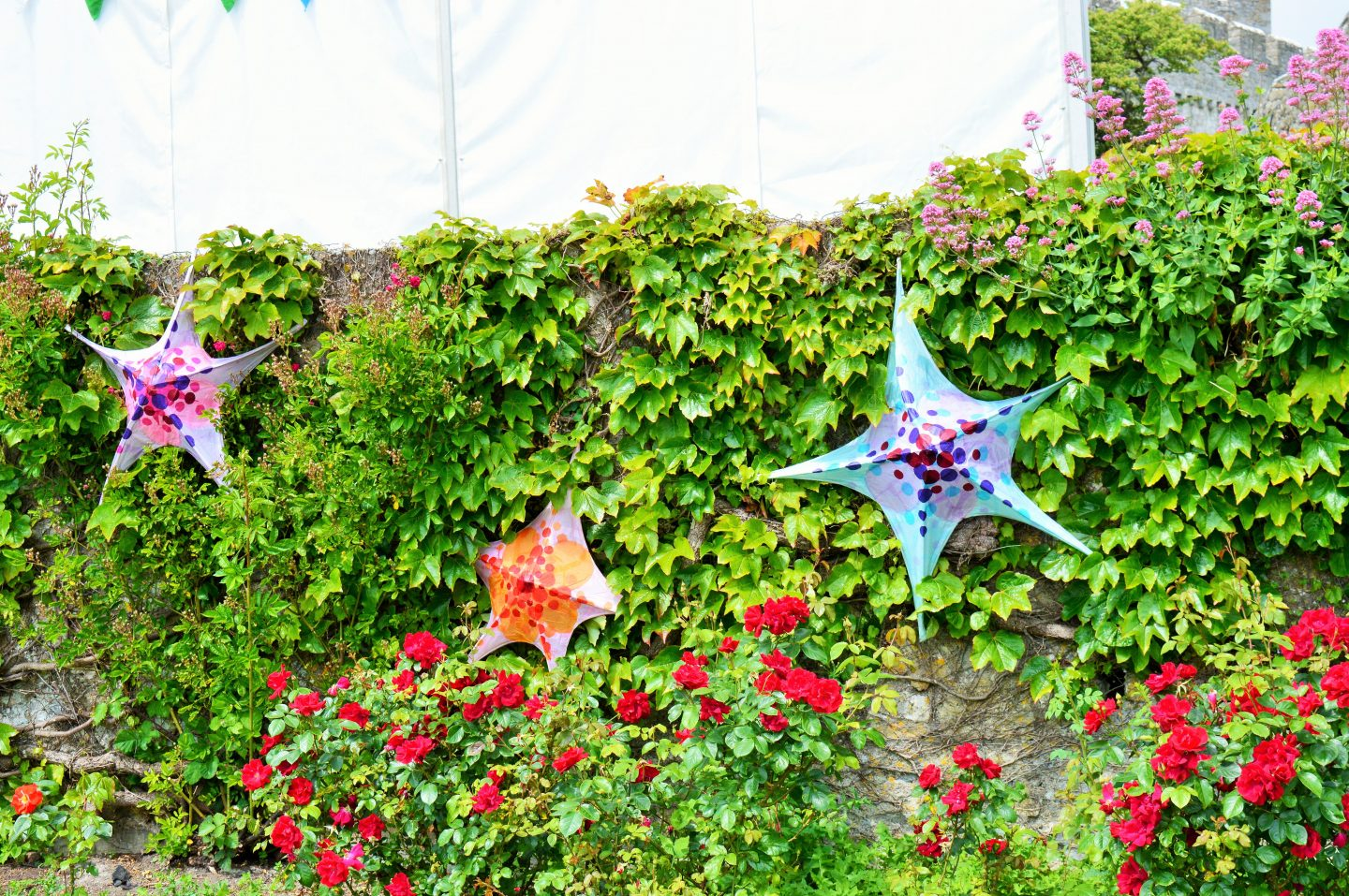 Paper starfish sculptures at Beyond the Border.