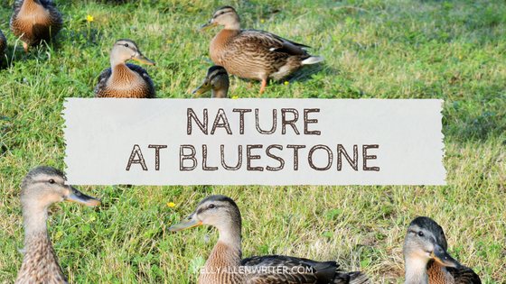 Bluestone: Nature at its Finest